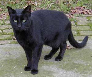 Blackie, undated