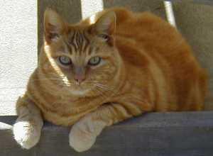 Hobbes naps under the patio glider.