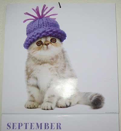 Mister September 2013