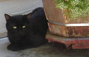 Stumpy lurks behind a planter