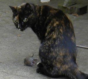Sydney the cat checks for witnesses